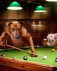 dog lining up pool shot